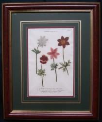 wienmann-3-framed