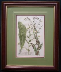 wienmann-4-framed