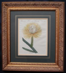 bertuch-2-framed-900-x-812