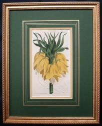curtis-mag-crown-framed
