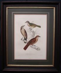 deurville-3-bird-framed-900-x-748
