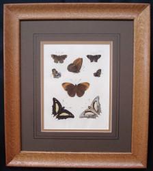 drury-framed-1-900-x-807