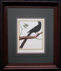 martinet-framed