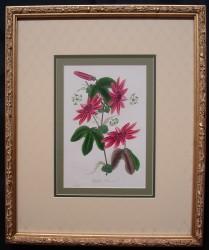 paxton-framed