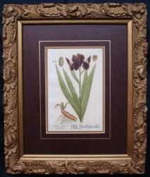 blackwell-3-framed