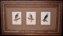 baird-framed-900-x-517