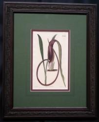 curtis-mag-1-framed
