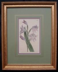 curtis-mag-4-framed