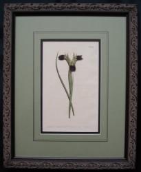 curtis-mag-5-framed