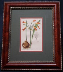 curtis-mag-6-framed