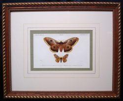 deobigny-framed-900-x-741