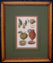 jonston-framed