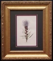 loddiges-2-framed