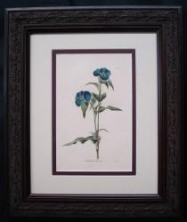 loddiges-4-framed