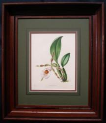 maud-framed