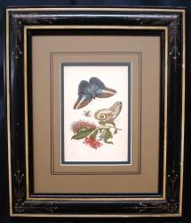 mirium-2-framed-900-x-774