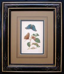 mirium-3-framed-900-x-781