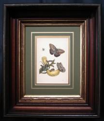 mirium-4-framed-900-x-774