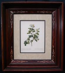 redoute-framed