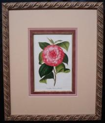 versch-framed