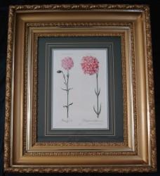trew-framed