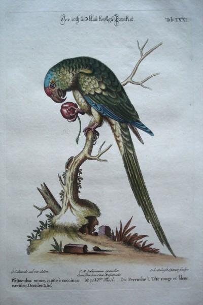 seligmann-parrot-900-x-600a