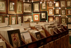 antique-prints-show
