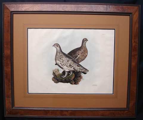 Selby, Prideaux John (1788-1867), Illustrations of British Ornithology, Second Edition