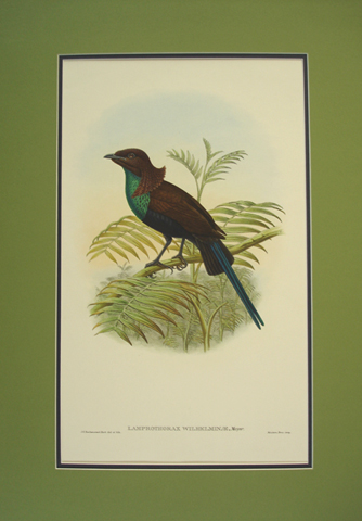 Gould, John (1804-1881) / Sharpe, Richard Bowdler (1847-1909), Monograph of the Paradiseidae (Birds of Paradise)