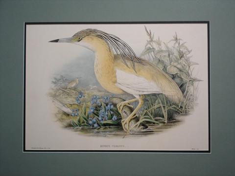 Gould, John (1804-1881) The Birds of Europe