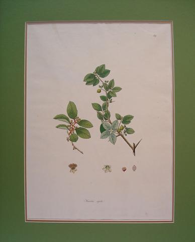 Roxburgh, William (1751-1815)