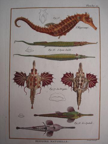 Bonnaterre, L'abbe Pierre Joseph (1747-1804), Ichthyology Category