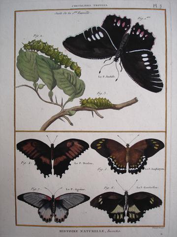 Bonnaterre, L'abbe Pierre Joseph (1747-1804), Entomology Category