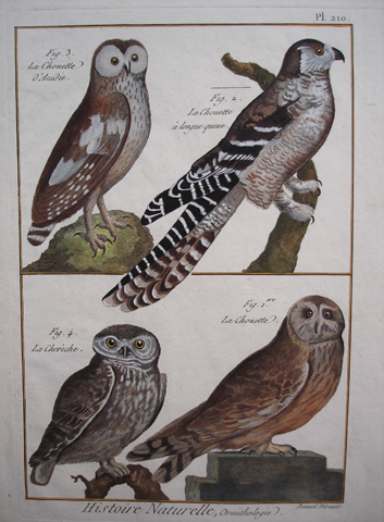 Bonnaterre, L'abbe Pierre Joseph (1747-1804), Ornithology Category