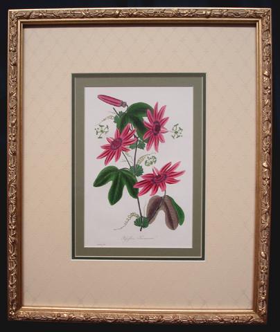 Paxton, Joseph (1803-1865) Magazine Of Botany
