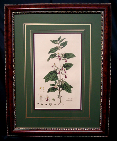 Curtis, William (1746-1799) Flora Londinensis, Second Edition