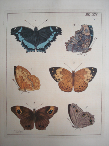 Drury, Dru (1725-1804) Illustrations of Natural History (1st Edition)