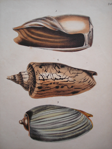 Berge, Frederick W. (1811-1883)