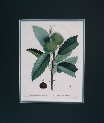 Redoute, Pierre Joseph (1759-1840) Traite Des Arbres Et Arbustes Que Lon Cultive En France En Pleine Terre