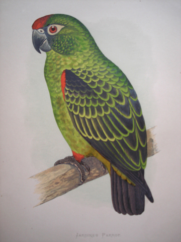 Green, W.T (Author), Lydon, Alexander Francis (1836-1917) (Artist)