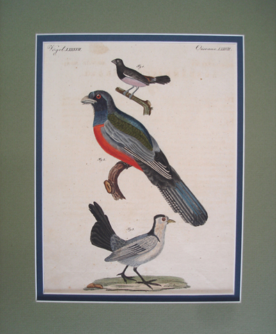 Bertuch, Friedrich Johan Justin (1747-1822), Ornithology Category
