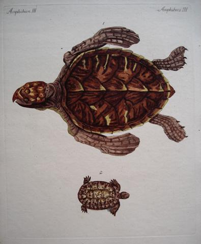 Bertuch, Friedrich Justin (1747-1822) Reptile Category