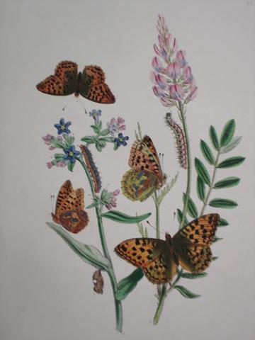 Humphreys, Henry Noel (1810-1879) and Westwood, Lohn Obadiah (1805-1893)