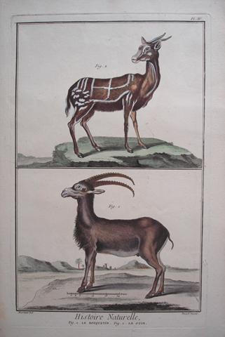 Martinet, Francois Nicolas (1731- c. 1790) Quadruped Category