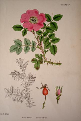 Sowerby, James (1757-1852)