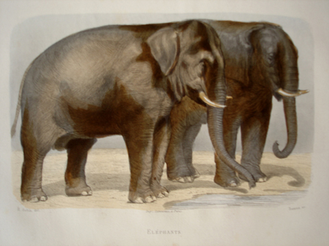 Travies, Edouard (1809-1865) / Gobin, Henry Quadruped Category