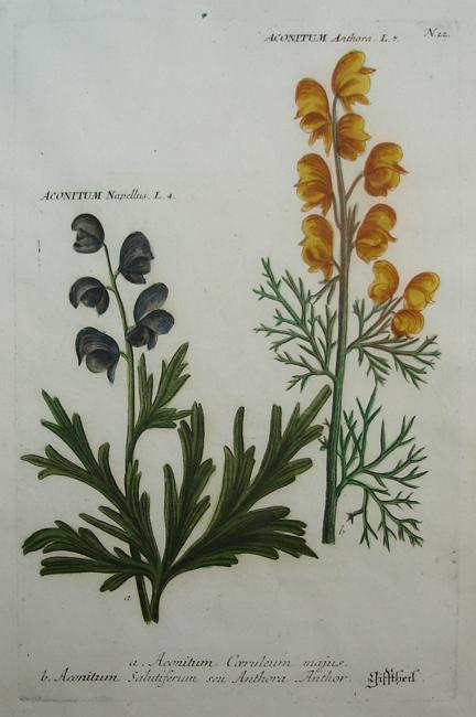 a) Aconitum Coeruleum majus, b) Aconitum Salutiferum seu Anthora Anthor