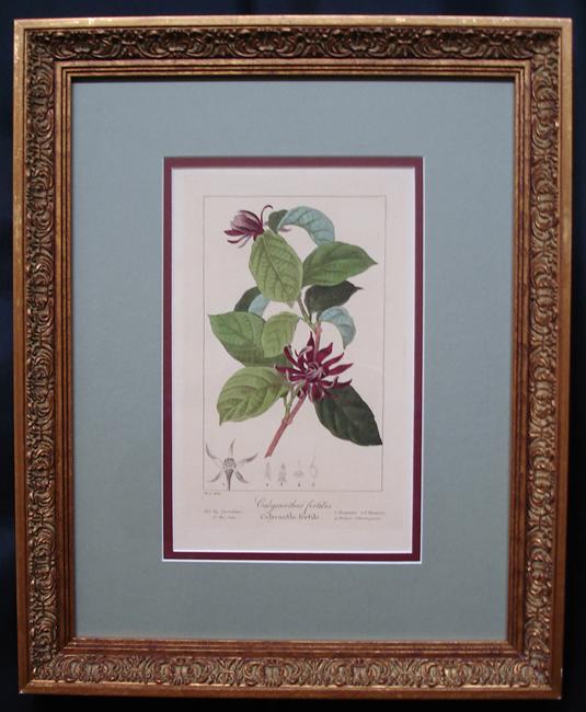 Bessa, Pancrace (1772-1836) Flore des Jardiniers, amateurs et manufactures d'apres les dessins de Bessa