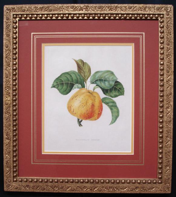 Bivort, Alexandre Joseph Desire (1809-1872) (Fruit)