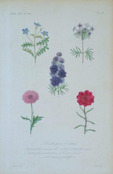 Plantes pour bordures for Plante pour bordure dallee